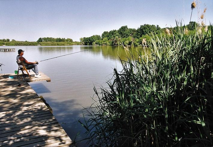 Gemeinde hartl naturteich gro hart for Fische naturteich